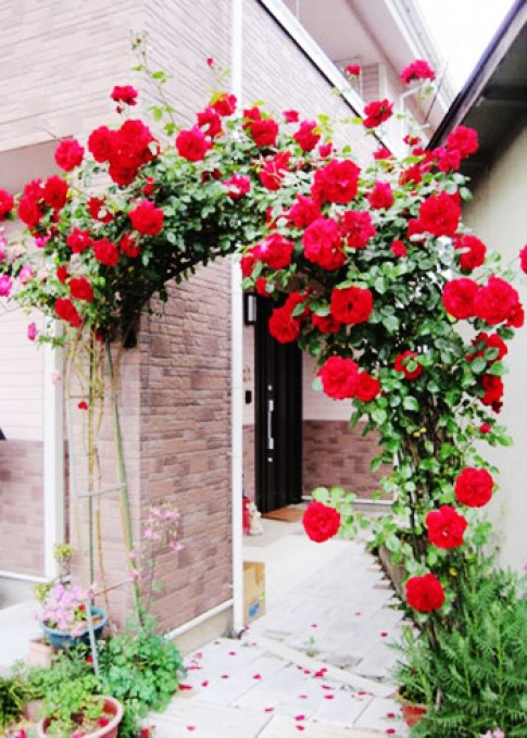 Hang rao nha 'duyen dang' nho hoa