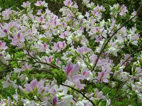 Lac loi tren nhung con duong hoa tuyet dep o Viet Nam