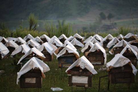 Moc Chau, noi nhung chu ong ve lay mat