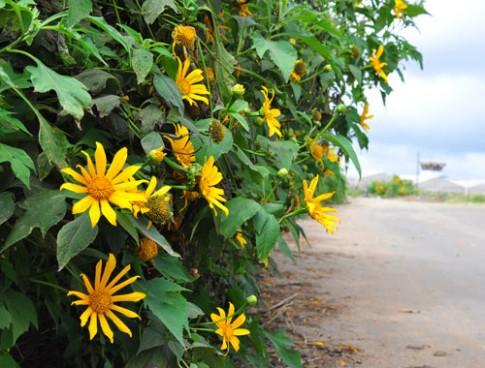 Nhung diem ngam hoa thang 11