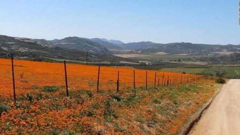 The gioi hoa ruc ro giua sa mac Nam Phi