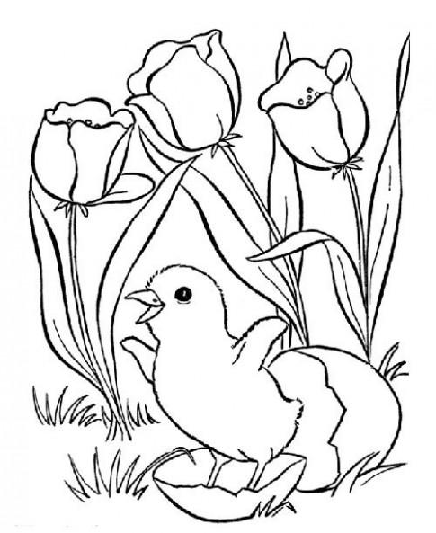 Tranh tô màu 'Gà con bên khóm hoa'