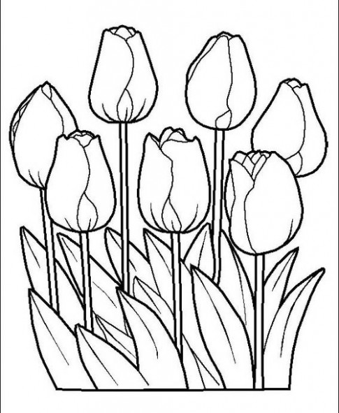 Tranh to mau 'Nhung bong hoa tulip'