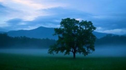 Vẻ đẹp hoang dại của dãy núi Great Smoky