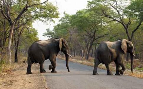 14 con voi trong cong vien bi dau doc de lay nga