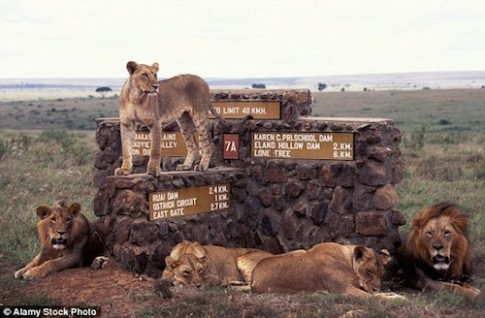 6 con su tu tron khoi vuon quoc gia Nairobi o Kenya