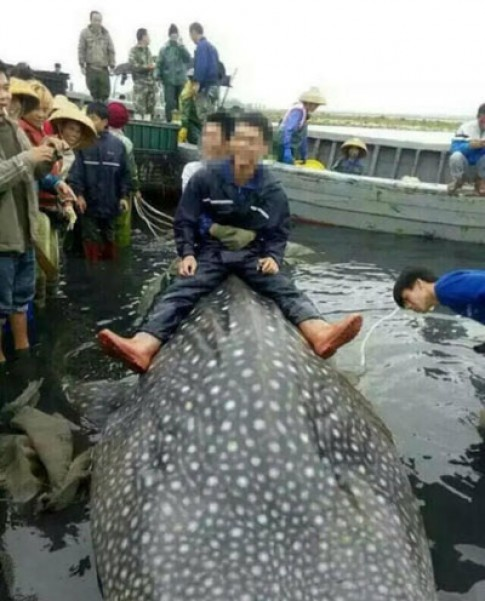 Cá mập hơn 1.000 kg sa lưới ngư dân Trung Quốc