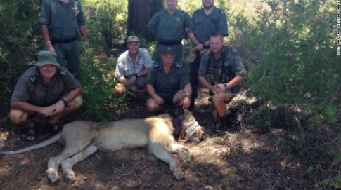 Du khách cứu sư tử sập bẫy ở Nam Phi