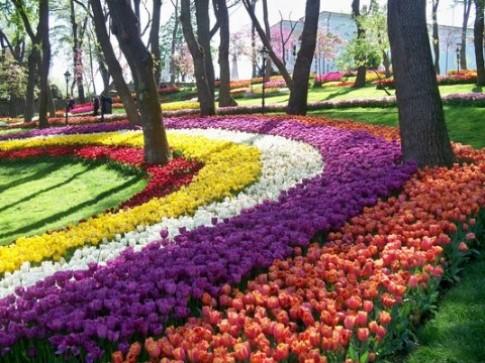 Du xuan ngam hoa Tulip tai Tho Nhi Ky