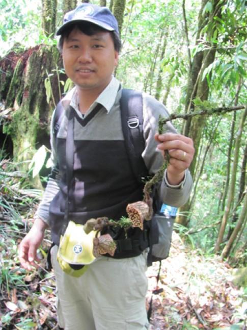 Hành trình khám phá 3 loài mộc hương mới