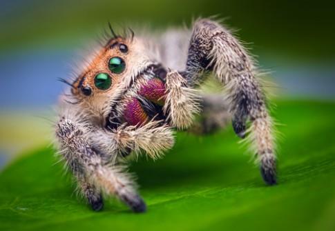 Những động vật có bộ ria kỳ lạ