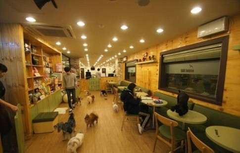 Quán cà phê cún hấp dẫn khách tại Hàn Quốc