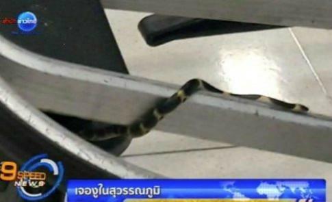 Sân bay Bangkok xin lỗi vì rắn xuất hiện trên xe đẩy hành lý