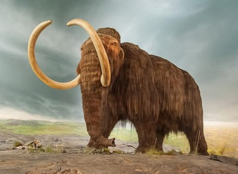 Viec hoi sinh voi ma mut gay tranh cai