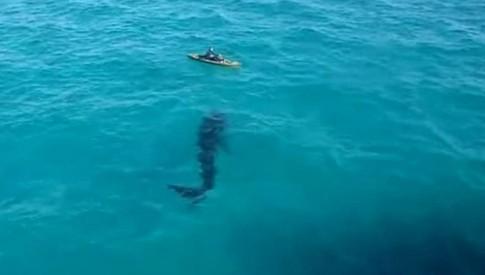 Du khách kinh hãi nhìn cá mập bơi quanh người chèo thuyền