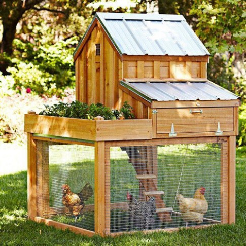 Những chuồng gà sạch và đẹp như ngôi nhà nhỏ