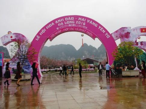 Lan dau tien mai vang Yen Tu khoe sac cung hoa anh dao