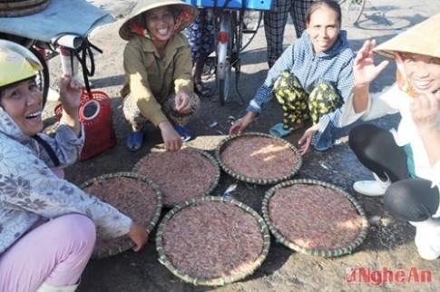 Mùa tép biển ngon nhất miền Trung