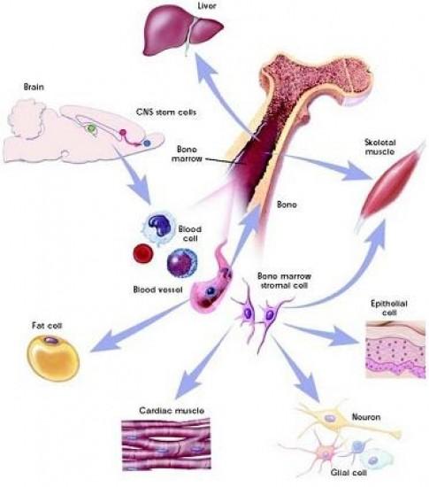 Trẻ hóa da mặt bằng tế bào gốc từ mỡ