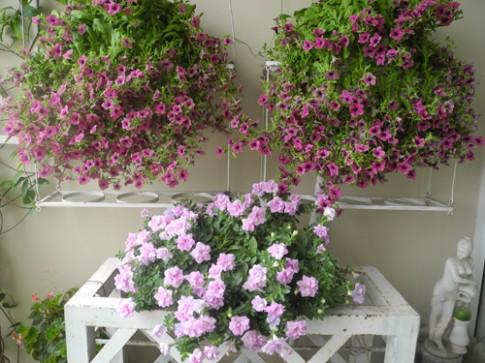 Ban cong tang 18 ngap hoa khien ai cung phai long o Ha Noi