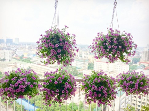 Ban cong tang 18 ngap hoa ruc ro o Ha Noi