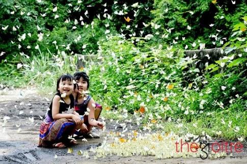 Buom bay rop duong dep ngat ngay giua rung Cuc Phuong