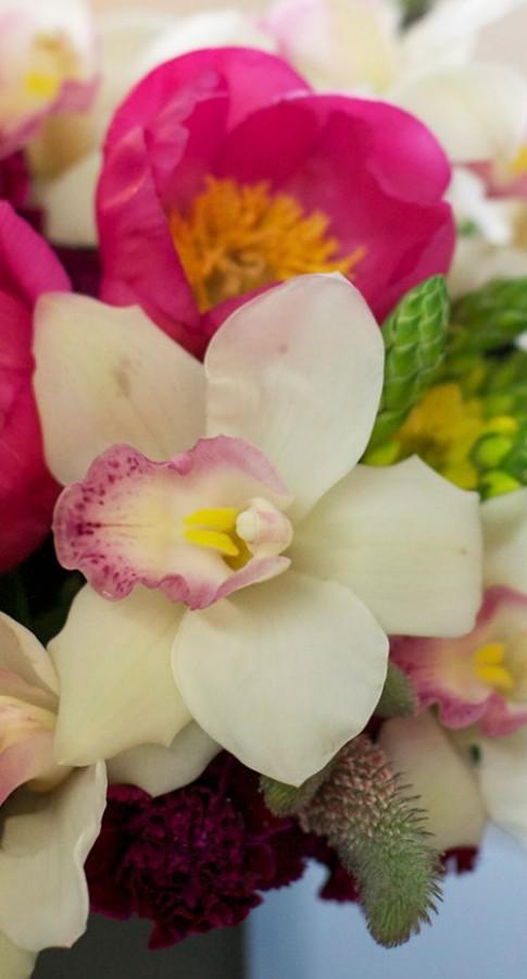Hoa dep 20-10: Cam Dia lan de ban 'hut mat'