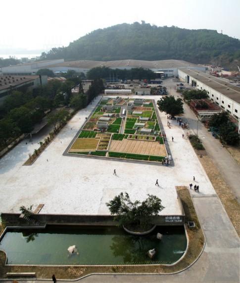 TQ: Vườn rau sạch 2000m² cho cư dân thành phố tự trồng