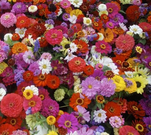 Loai hoa may man cho 12 cung hoang dao