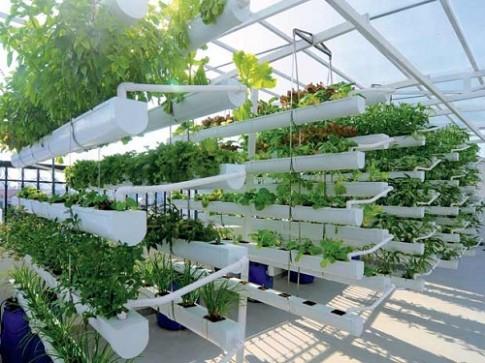 Gợi ý mẹ đảm các loài cây thích hợp cho khu vườn nhỏ