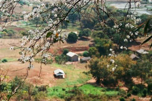 Hạ Long tổ chức lễ hội hoa anh đào, Điện Biên có lễ hội hoa ban