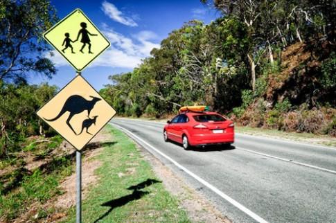 Kho nhu lay bang lai xe o Australia