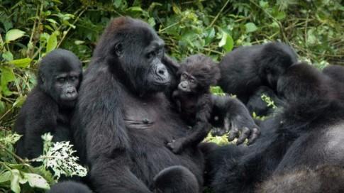 Những điểm thăm động vật thú vị nhất thế giới