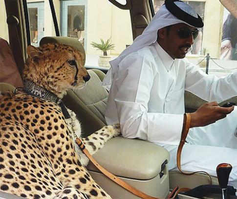 Kieu giao thong chi co o Dubai