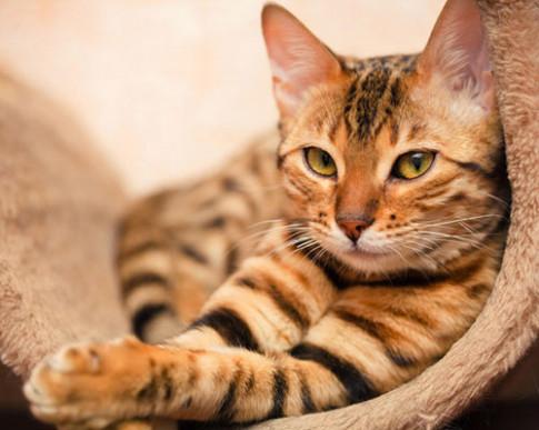 8 bài học làm đẹp từ chú mèo cưng của bạn