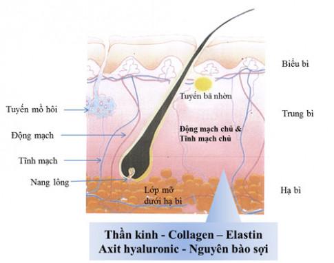 Tại sao placenta ưu việt hơn collagen trong việc chăm sóc da?