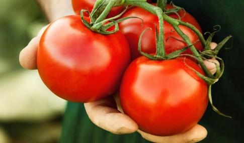 Được ăn miễn phí cà chua ngon nhiều năm, ai ngờ cây tươi tốt vì... xác chết trong vườn