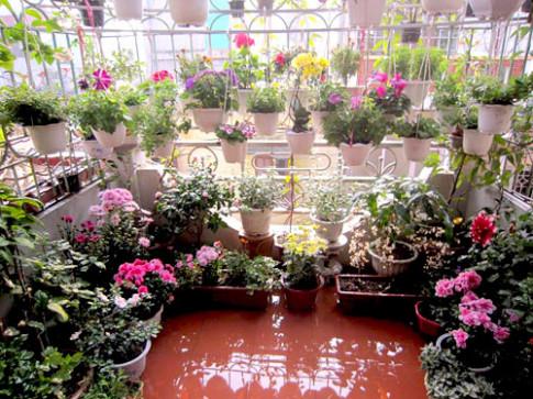 Thai Binh: Vuon hoa tram chau khong can bi quyet cham trong