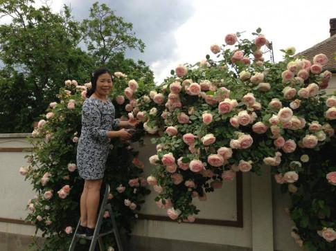 Mẹ Việt ở Hungary quý hoa hồng hơn cả kim cương