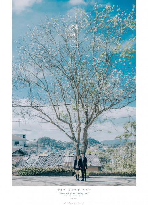 Xao xuyến với bộ ảnh hoa ban nở giữa tháng Ba đẹp lung linh như tranh vẽ tại Đà Lạt