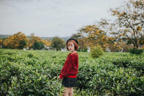 9x Gia Lai tha dang giua rung hoa muong vang dep nhu tranh ve