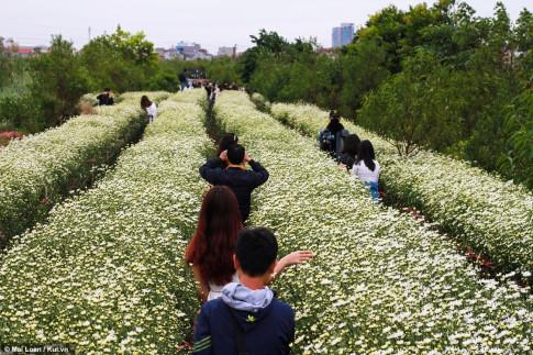 Gioi tre Ha Thanh lai 'phat sot' voi nhung bong Cuc hoa mi dau mua!