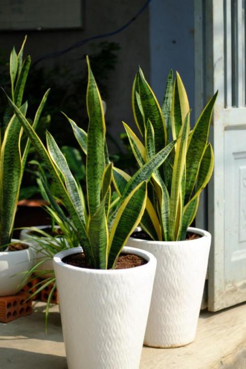4 sai lầm khi trồng cây trong nhà khiến cây chết rũ, người héo mòn ốm yếu